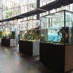 col·lecció CosmoCaixa Barcelona