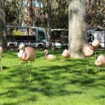 flamencs Zoo Barcelona