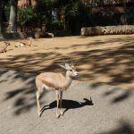 gasela Zoo Barcelona