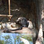 primat Zoo Barcelona