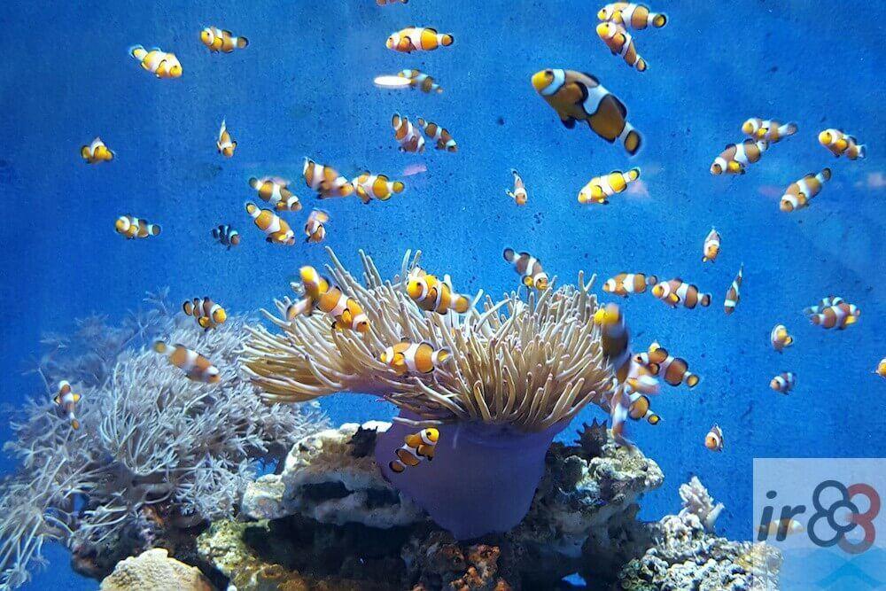 compra entrades Aquarium Barcelona
