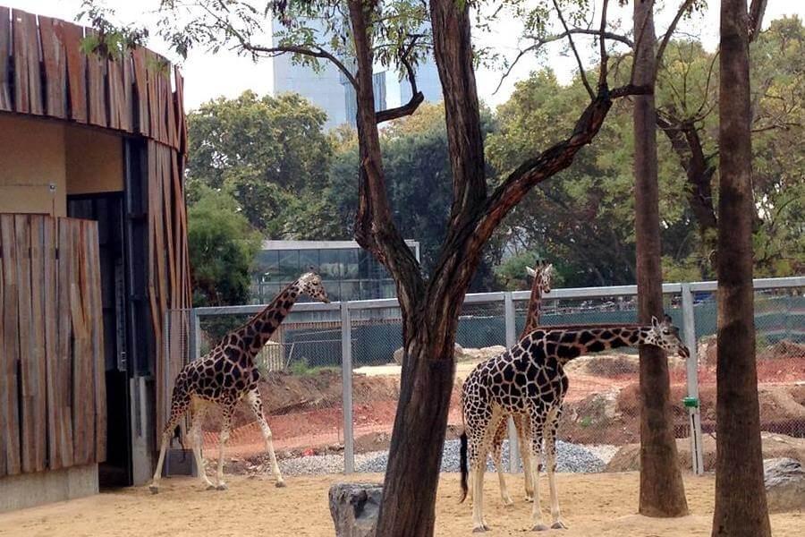 compra entrades Zoo Barcelona