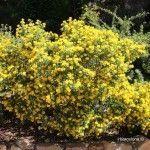 flors jardí botànic històric