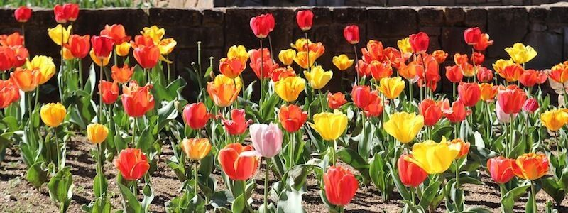 flors jardins Mossèn Cinto Verdaguer