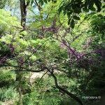 vegetació jardí botànic històric