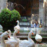 oques al claustre de la Catedral de Barcelona