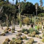 cactus jardins Mossèn Costa i Llobera