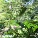 plantes jardí botànic històric