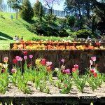 tulipes Jardins Mossèn Cinto Verdaguer