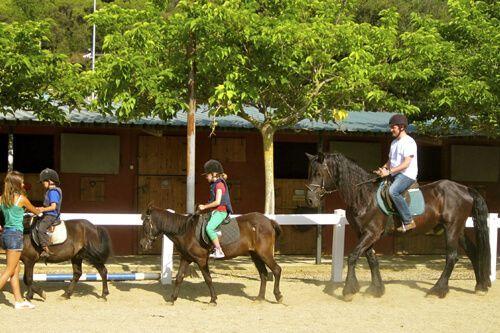cavall Parc de Collserola