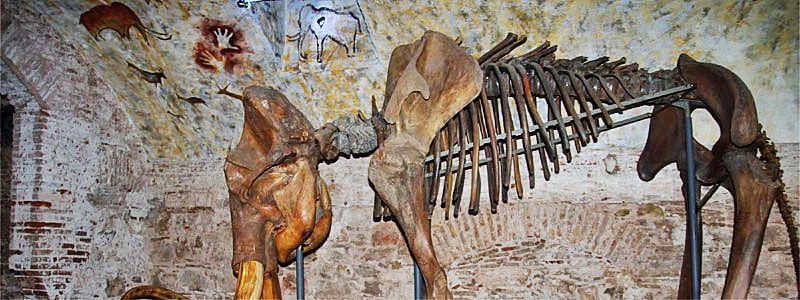 Museu del Mamut