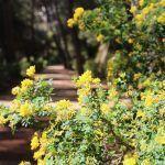 flors Parc del Laberint d'Horta