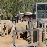 elefants Zoo Barcelona