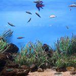 peixos Aquàrium Barcelona