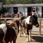 ponis granja Zoo Barcelona