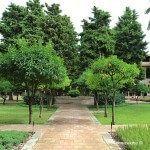 arbres en el claustre del Monestir de Pedralbes