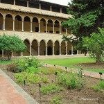 jardí medicinal claustre Monestir de Pedralbes