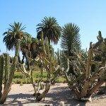 vegetació jardins Mossèn Costa i Llobera