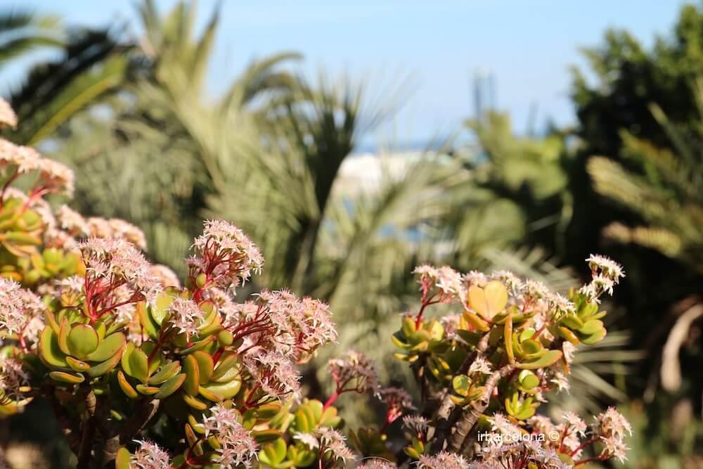 detall jardins Mossèn Costa i Llobera