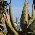W Barcelona entre cactus