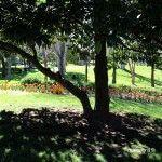 arbre i la seva ombra