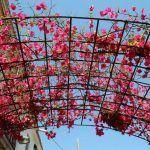 flors Carrer d'Aiguafreda