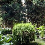 claustre Monestir Pedralbes