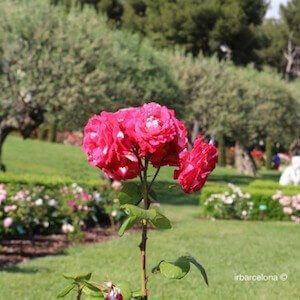 Concurs Internacional Roses Noves