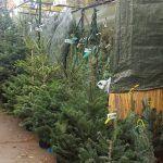 arbres Nadal Fira Sagrada Família
